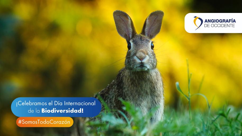 ¡Celebramos el día Internacional de la Biodiversidad!